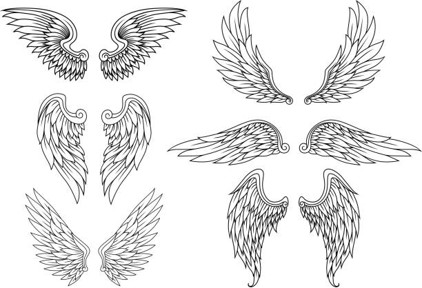 illustrations, cliparts, dessins animés et icônes de héraldique ensemble d'ailes - tatouages d'anges