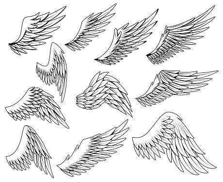 Heraldic wings set. Vintage birds wings. Set of design elements in coloring style