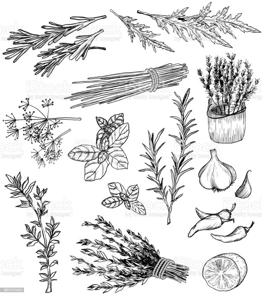 Ervas e especiarias - ilustração de arte em vetor