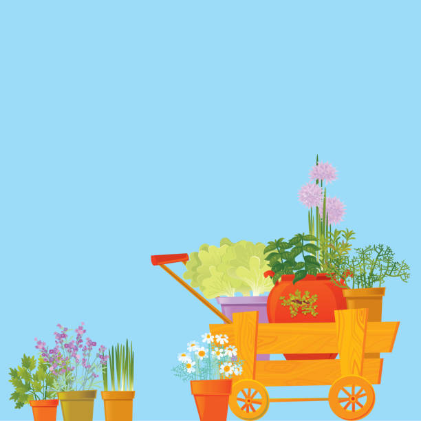 Herb Background Herb Background. Vector illustration. garden center stock illustrations