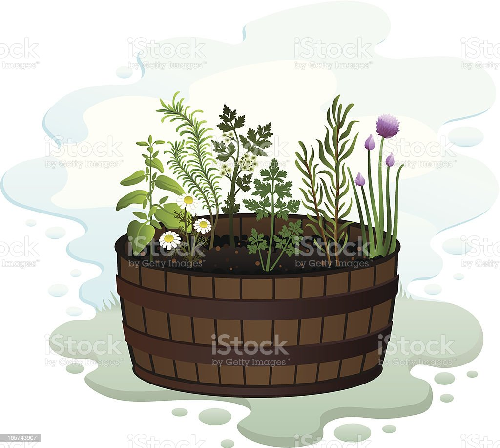 Herb Garden in a Barrel royalty-free herb garden in a barrel stock vector art & more images of chamomile plant
