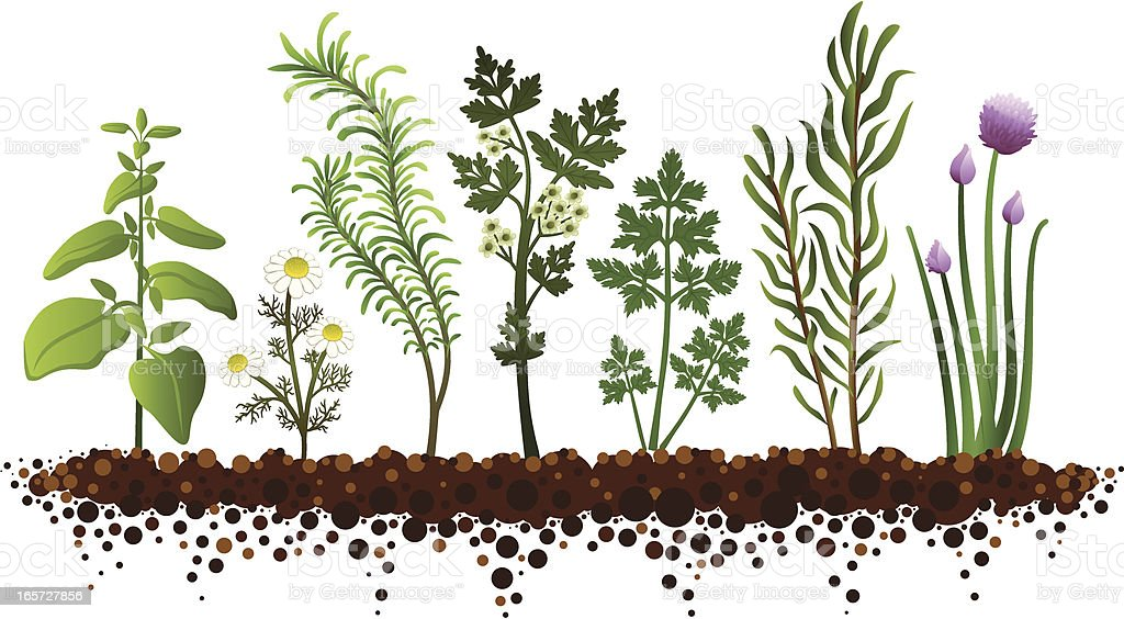 Herb Garden royalty-free stock vector art