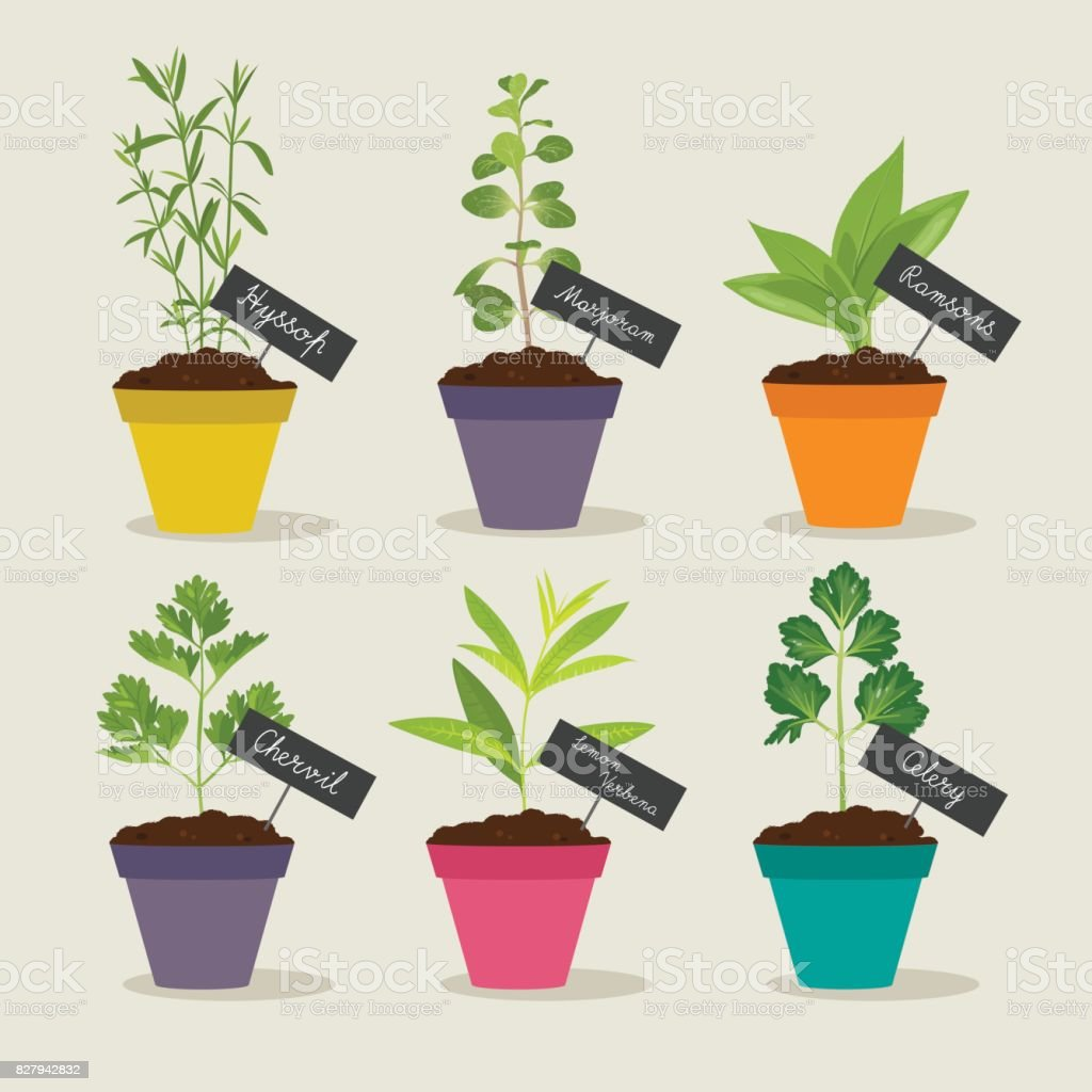 Herb Garden With Pots Of Herbs Set 3 Stock Illustration Download