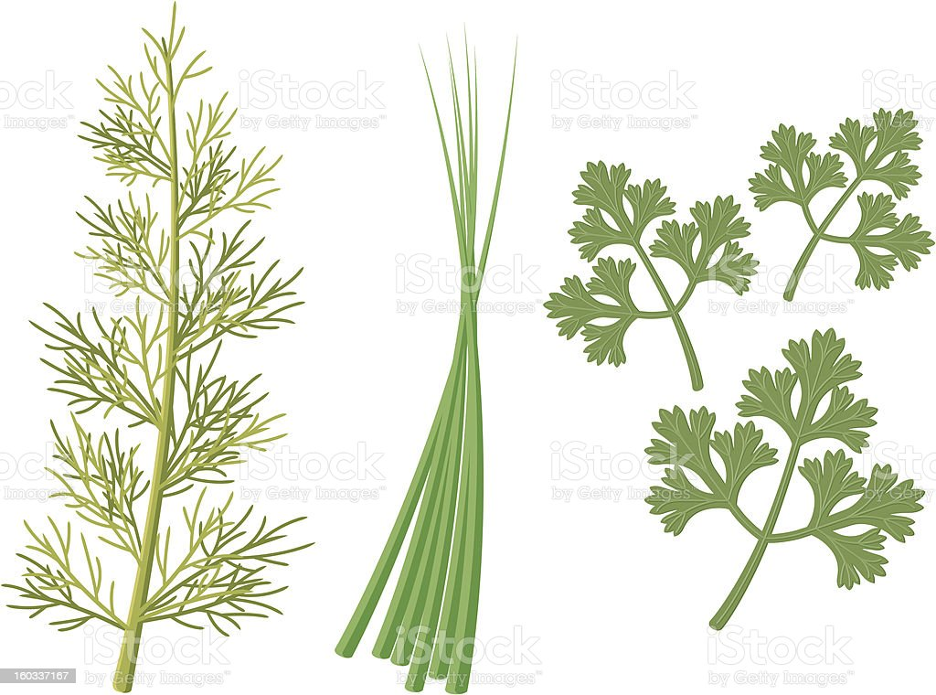 Herb Icons royalty-free stock vector art