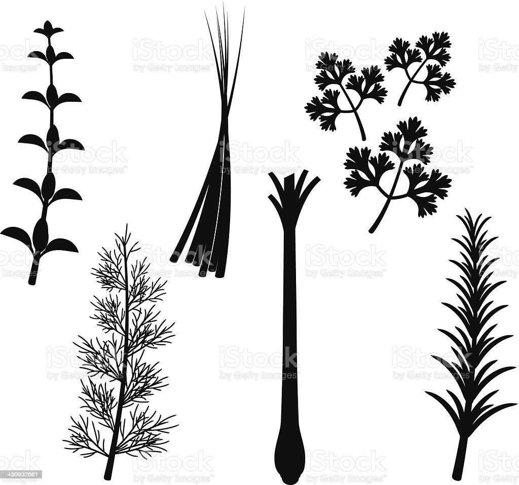 Conjunto de silhueta de ervas - ilustração de arte em vetor