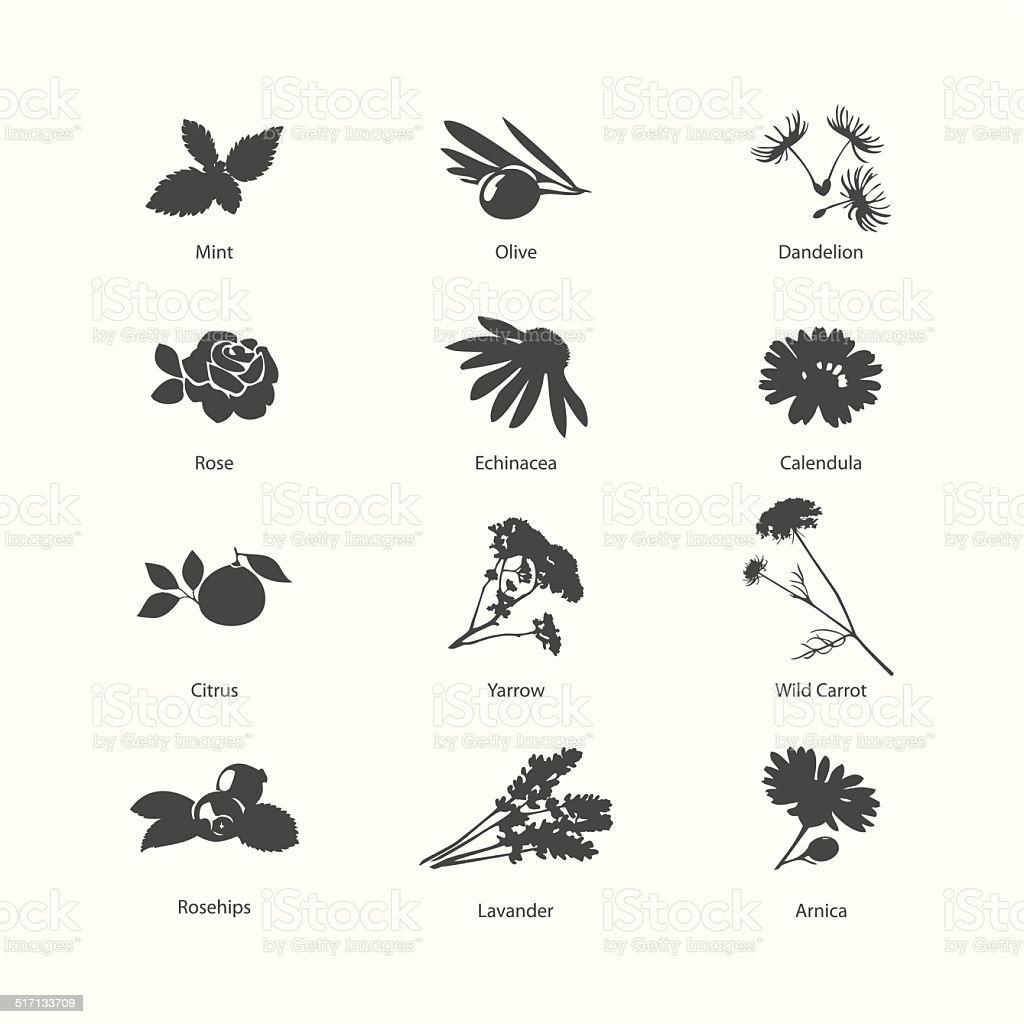 Herb symbols set vector art illustration