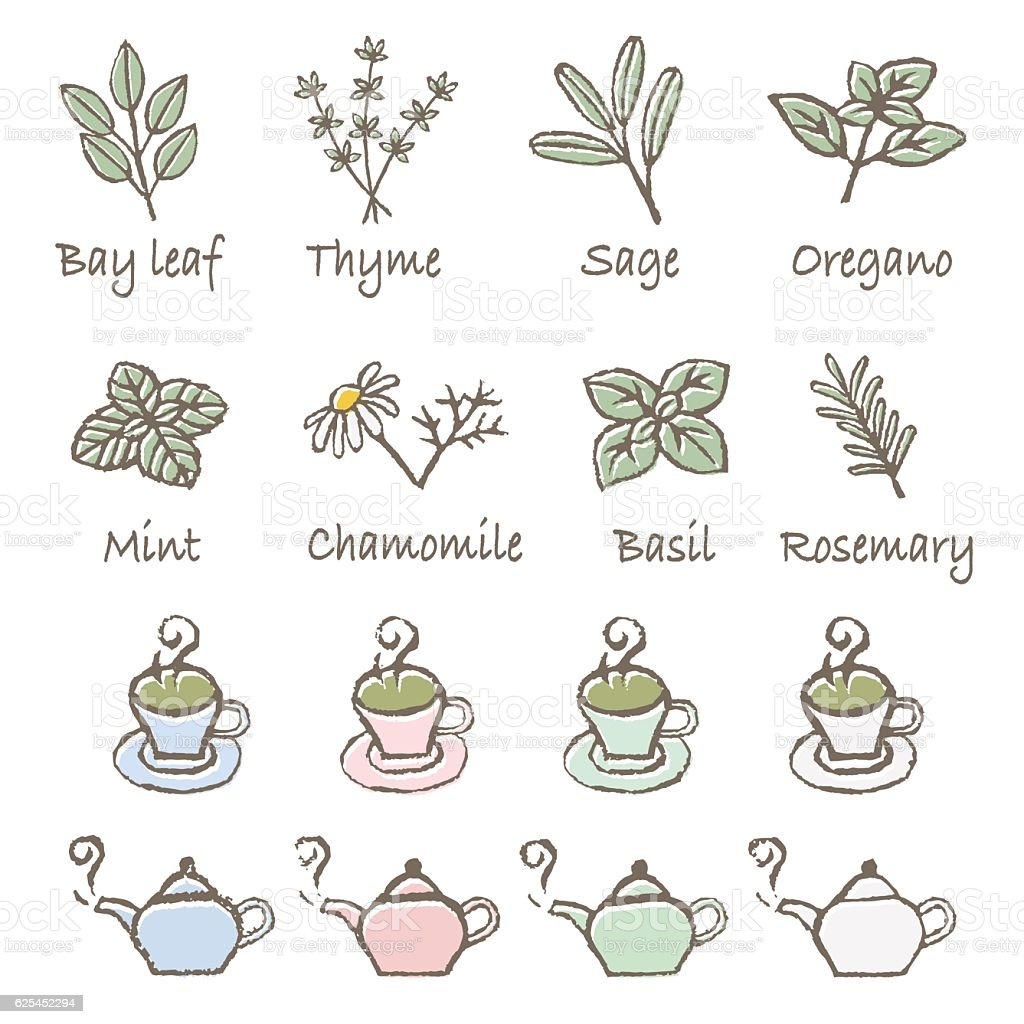 Herb, teacup and teapot icon set vector art illustration