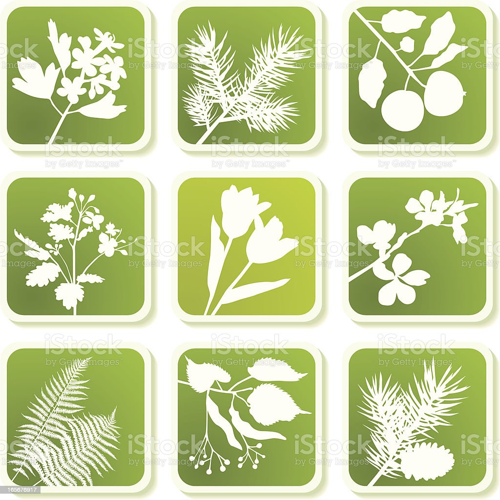 Herbal icons royalty-free herbal icons stock vector art & more images of autumn