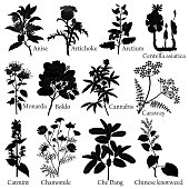 Herbal. Illustration of a plants in a vector with flower for use in the cooking of medicinal herbal tea. Also for engraving or for ceramics.