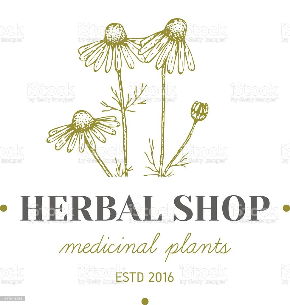 Herbal logo. vector art illustration