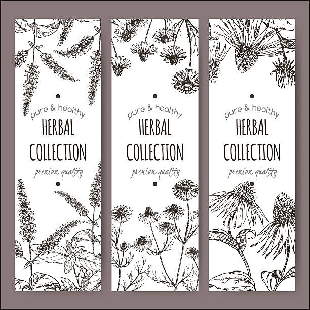 Herbal tea labels with peppermint, chamomile, echinacea Set of 3 vector herbal tea labels with peppermint, chamomile and echinacea on hand drawn sketch. Placed on white background. chamomile plant stock illustrations