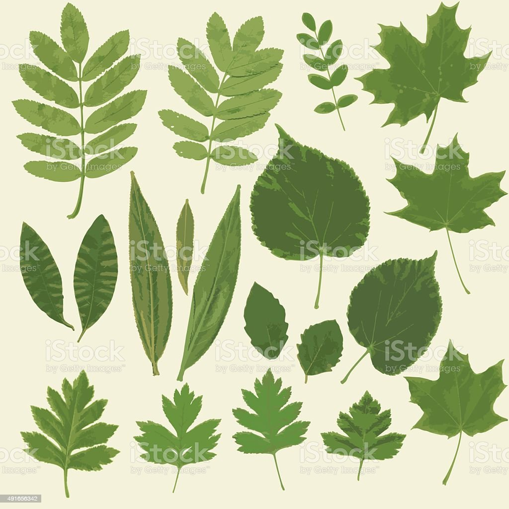 Herbarium colection vector art illustration