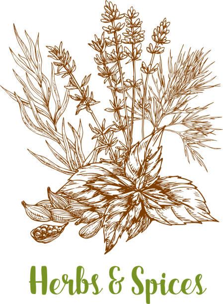 kräuter und pflanzliche gewürze vektor-skizze - dressing stock-grafiken, -clipart, -cartoons und -symbole