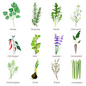 Herbs and spices. Camomiles thyne lemongrass wild flowers cartoon vector isolated. Organic spice and botanical herb illustration