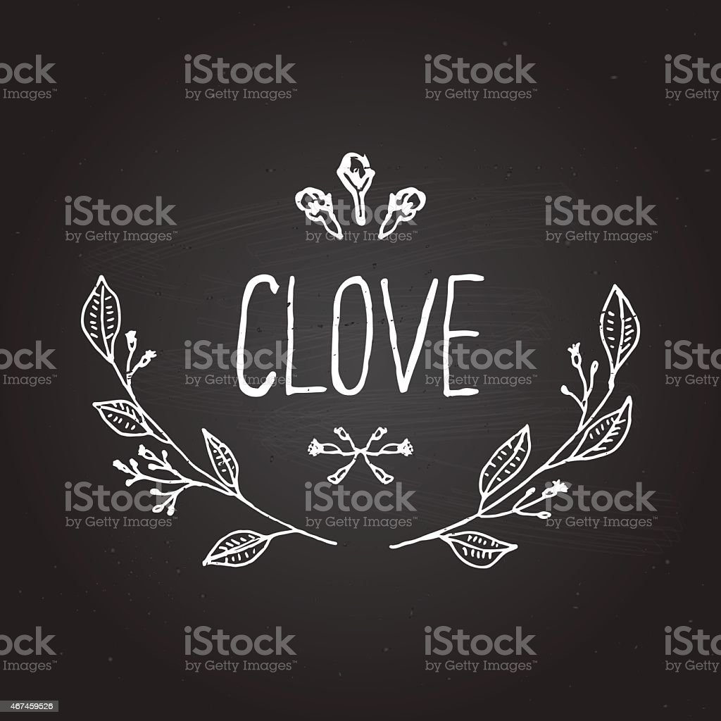 Herbs and Spices Collection - Clove vector art illustration