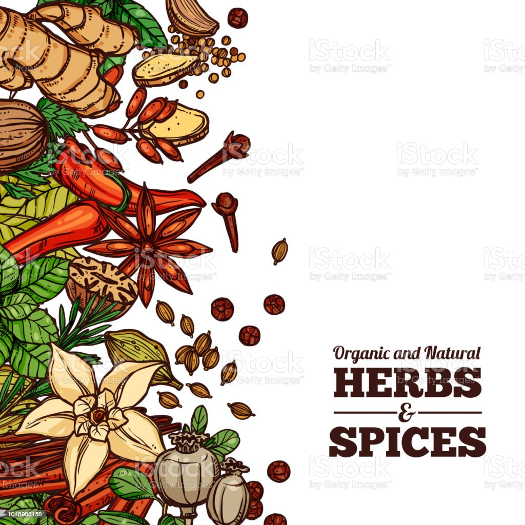 Herbes et épices couleur fond - Illustration vectorielle