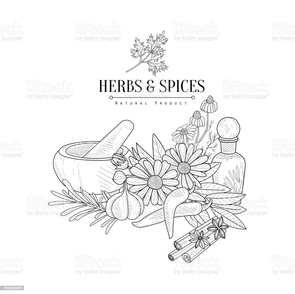 Herbs And Spices Hand Drawn Realistic Sketch Stock Illustration