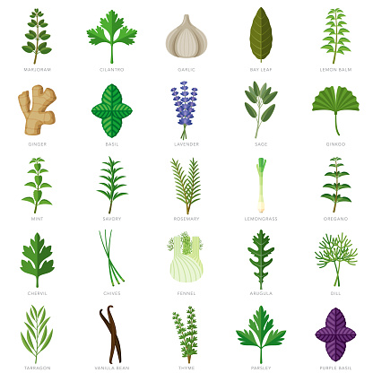 Herbs and Spices Icon Set