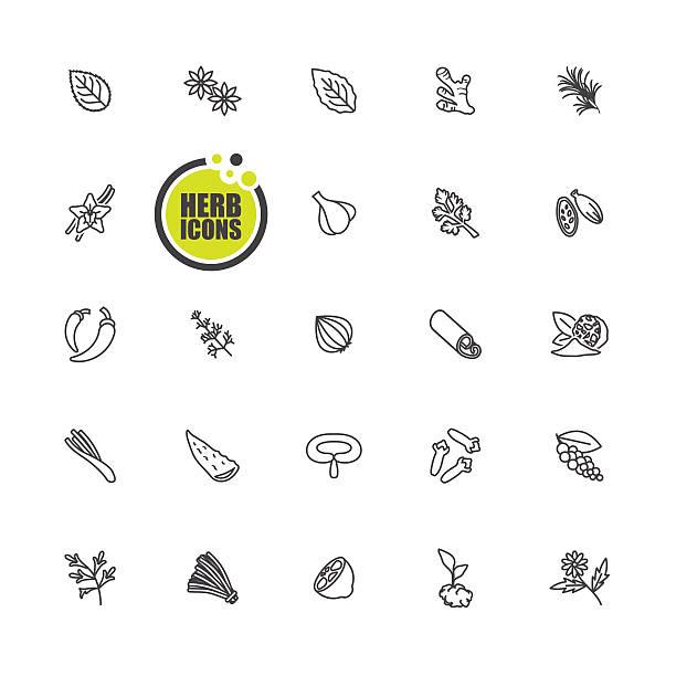 zioła kuchenne i przyprawy korzenne ikona - liść mięty przyprawa stock illustrations