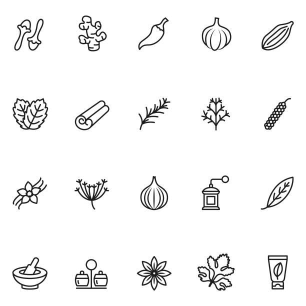 허브와 향신료 아이콘 - 아니스 stock illustrations