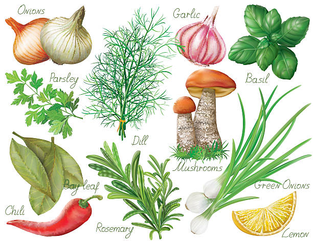 Herbs and spices Set with green herbs and spices on white background. Vector illustration dill stock illustrations