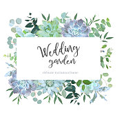 Herbs and succulents vector frame. Hand painted plants, branches, leaves on white background. Echeveria, eucalyptus, greenery. Natural wedding card design. All elements are isolated and editable.
