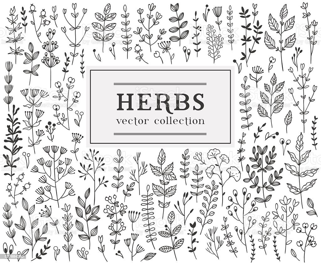 Herbs and twigs set for your design vector art illustration