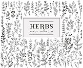 Herbs and twigs set for your design