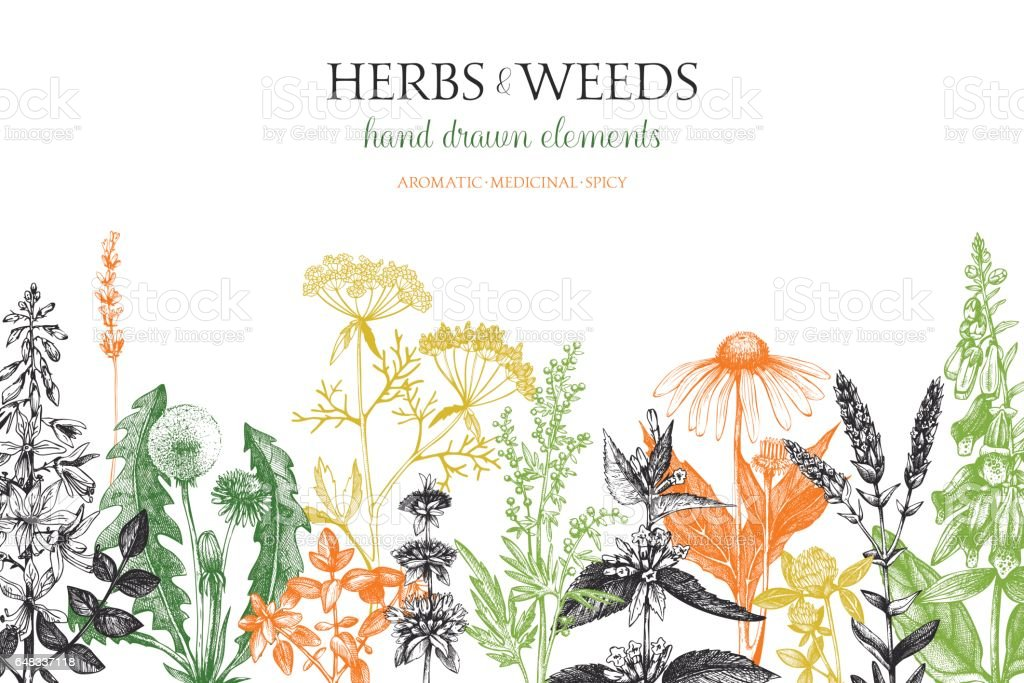 Diseño de hierbas y malezas - ilustración de arte vectorial