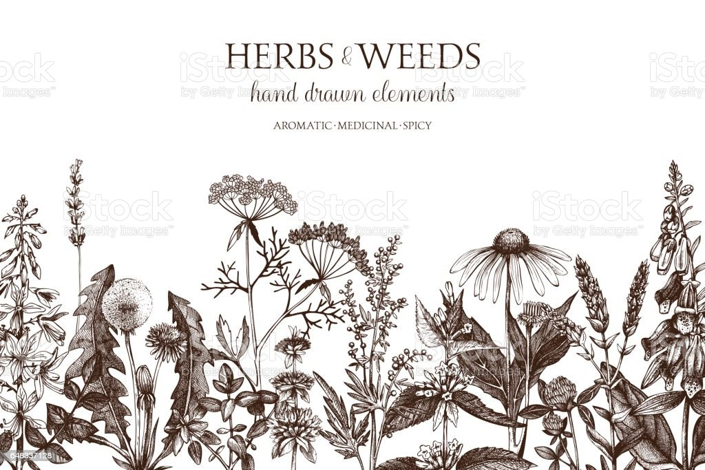 Herbs and weeds design vector art illustration