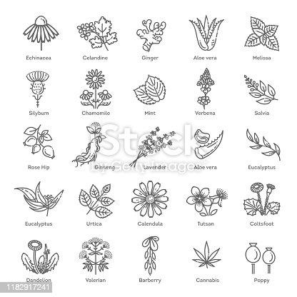 Herbs collection. Vector botanical set