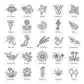 Herbs collection. Vector botanical set