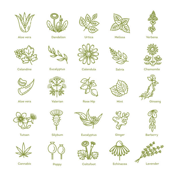herbs collection. medical healthy herbs and flowers - aloe vera stock illustrations