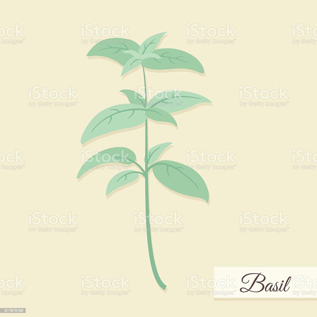 Basil bunch vector illustration