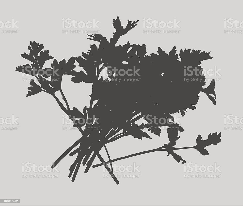Herbs - Parsley Vector royalty-free herbs parsley vector stock vector art & more images of bunch