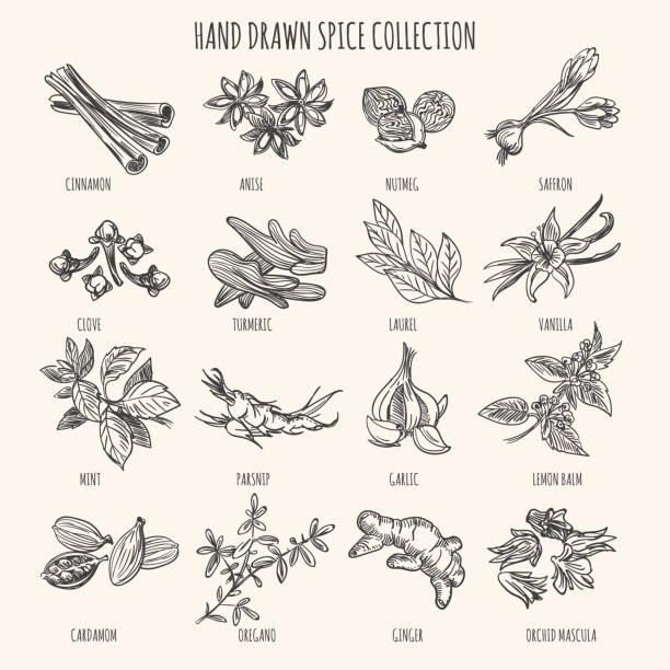 Herbs, seasonings and seeds ingredients vector art illustration