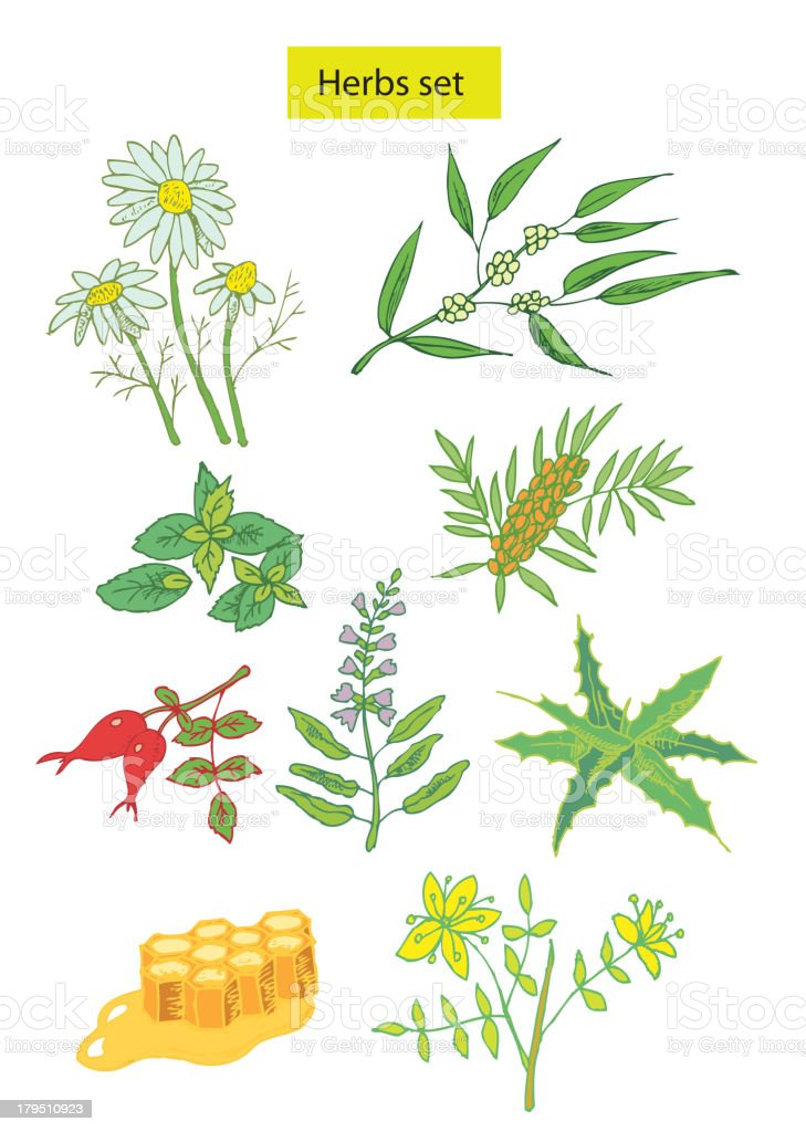 herbs set detailed illustration royalty-free stock vector art