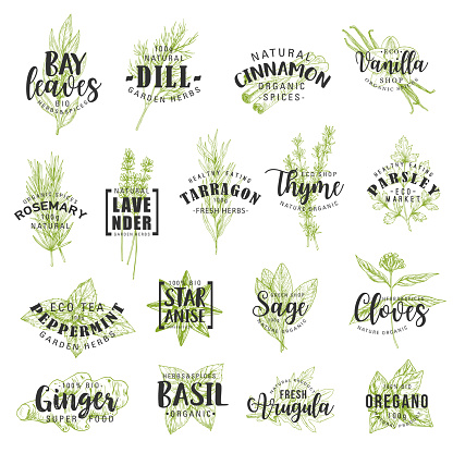 Herbs, spices, seasonings and condiments lettering