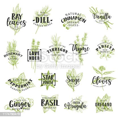 Herbs and spices vector lettering with vegetable seasonings and condiments sketches. Parsley, rosemary and thyme, basil, mint and ginger, cinnamon, vanilla, anise and dill, food ingredients