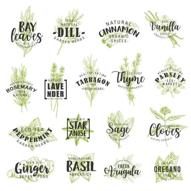 herbs, spices, seasonings and condiments lettering - лекарственная трава stock illustrations