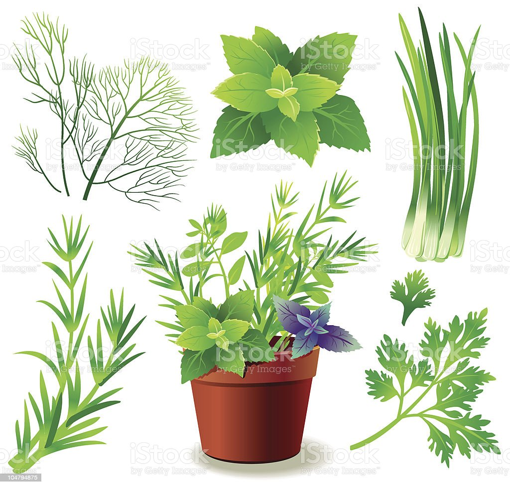 Herbs royalty-free stock vector art