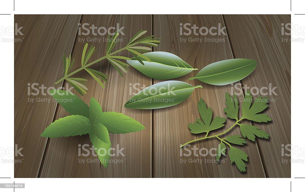 Herbs ( Laurel , Rosemary,Mint, Parsley ) royalty-free stock vector art