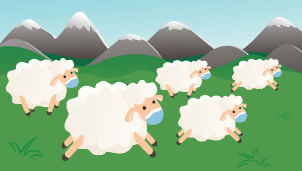Herd immunity of covid-19, sheeps with protective mask vector art illustration