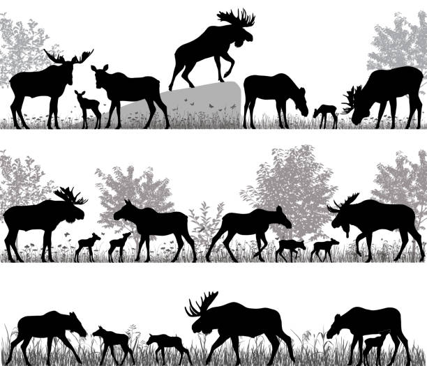 Herd of moose Silhouettes of mooses also named elks and its cubs outdoors elk stock illustrations
