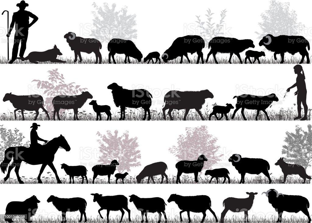 Troupeau de moutons - Illustration vectorielle