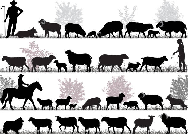 Herd of sheep Silhouettes of sheeps, rams and lambs outdoors flock of sheep stock illustrations