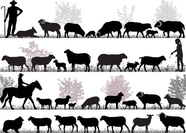 stockillustraties, clipart, cartoons en iconen met kudde schapen - schaap