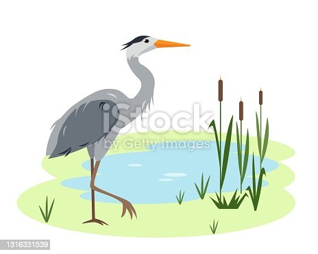 istock Heron bird on Lake or pond with canes and grass 1316331539