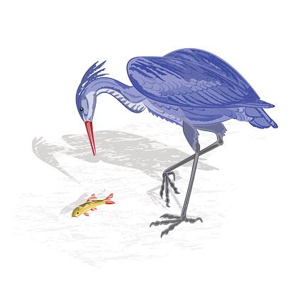 Heron hunting fish