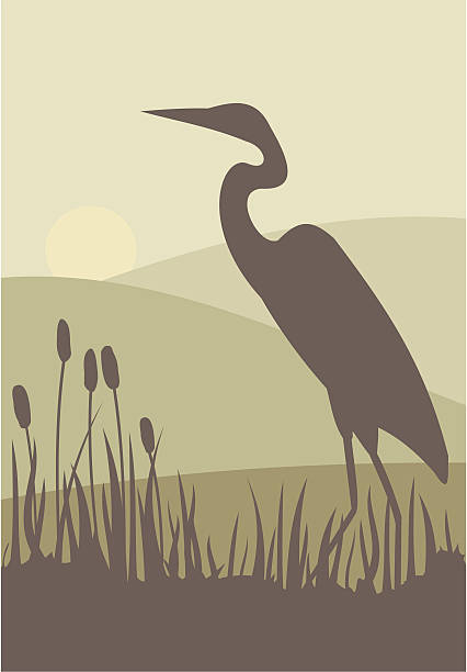 Heron A heron wades through bullrushes against a serene landscape. heron stock illustrations
